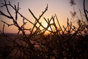 sunset though a bush
